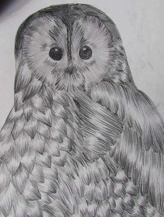 Pencilled Owl - Tahlia paige
