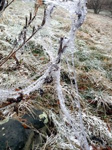 After the Ice Storm 2