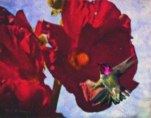 Ruby Throated Hummingbird and Poppy - Saco River Art & Photography