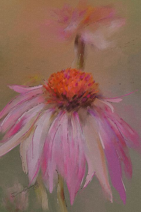 CONEFLOWER - SHAYNA PHOTOGRAPHY