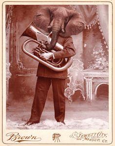 Distinguished Elephant