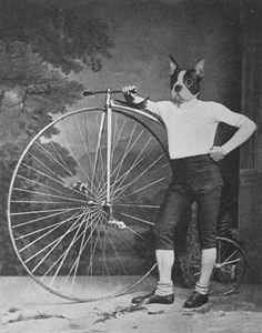 French Bulldog with Bike