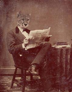 Distinguished Cheeta