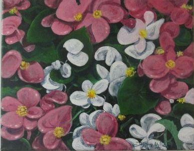 Flowers pink and white - Jeffrey Miller