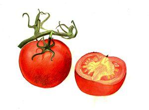 tomatoes - natalija's gallery