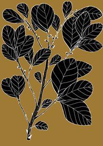 Wild Prune - Pouteria Sericea - Ivos Art