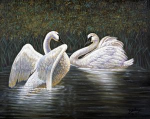 Enjoying The Trumpeter Swans