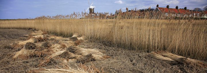reed beds Cley Windmill, Norfolk - Dave Porter Landscape Photography