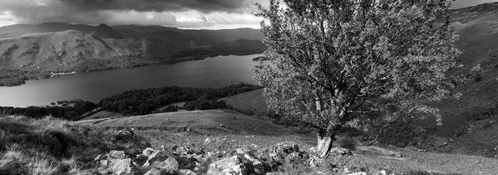 Rowan Tree, Ashness fell - Dave Porter Landscape Photography