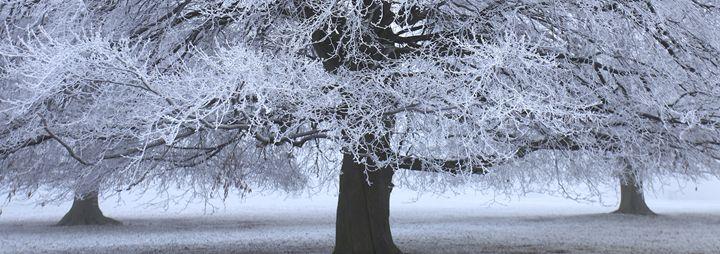 Misty Beech tree - Dave Porter Landscape Photography