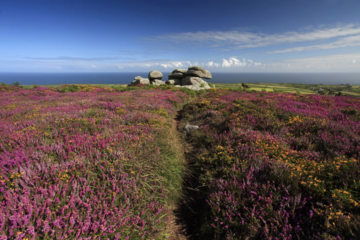 Gorse and Heather Moorland - Dave Porter Landscape Photography