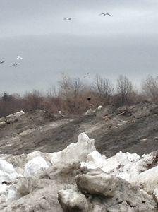 Mound of Dark Snow