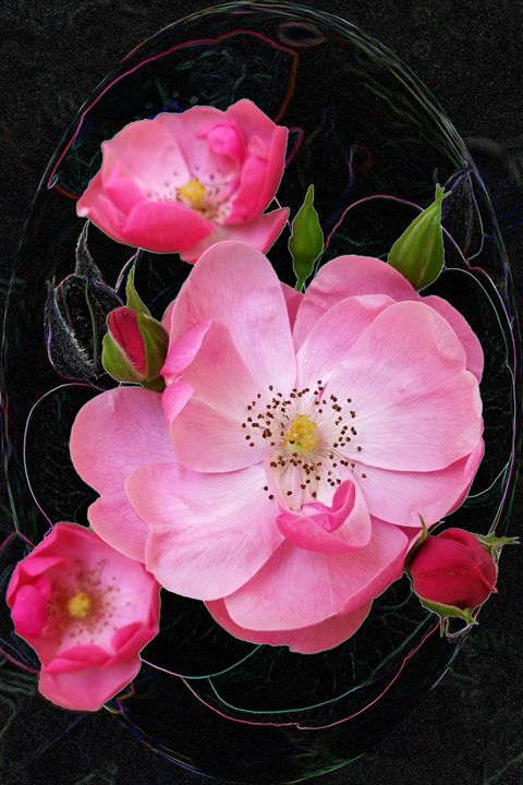 tiny rosebud opens - feiermar