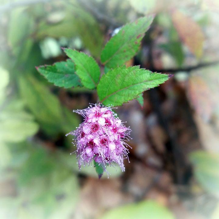 Blooming in autumn - feiermar