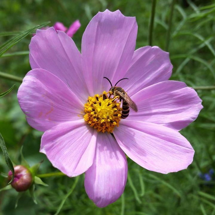 bee on flower - feiermar