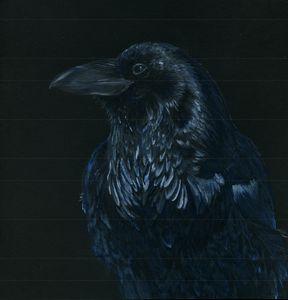 Raven at Rest - Sara Jeanette Schlumbohm