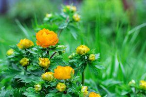 Orange flower in the summer garden