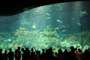 Excitement at an Aquarium