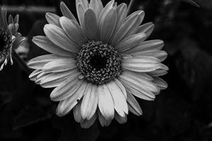 Simple Little Flower