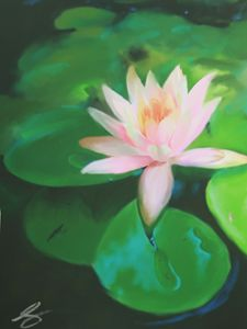 Untitled Lily