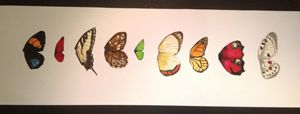 Watercolour wing collection
