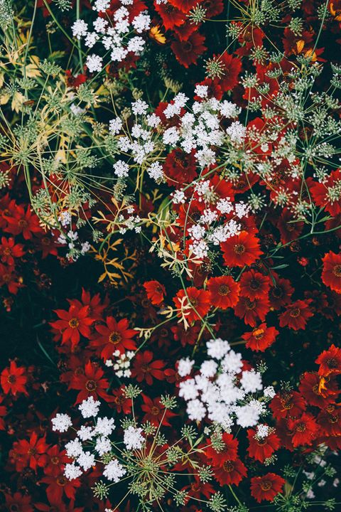 Floral - Mixed Imagery
