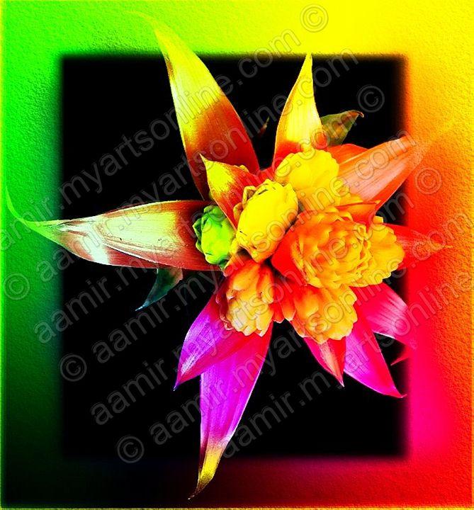 Red-Yellow-Green Flower - Aamir Show
