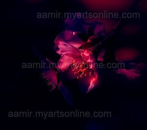*Night Flower* linen canvas artwork