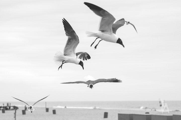 Beach Birds - StackTown Films