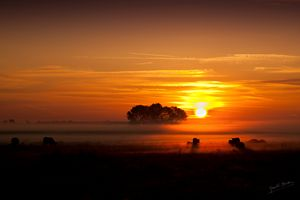 Enigmatic Mist